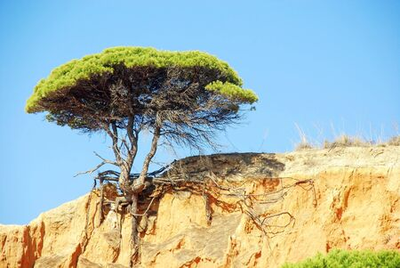 beautiful landscape with red cliffs, blue sky and pine tree (Algarve,Portugal)