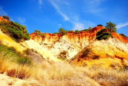beautiful summer landscape with sand red cliffs,pine trees, blue sky and reed on the Atlantic coastline  Algarve,Portugal  photo