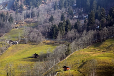 meadow and forest hills landscape at early spring in the Austrian Alps. photo