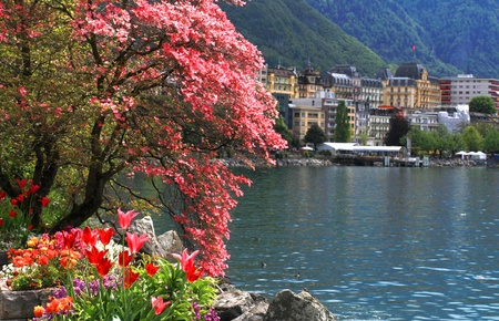 A beautiful spring landscape with flowers and blooming magnolia branch, Lake Geneva and view of Montreux, Switzerland  Selective focus