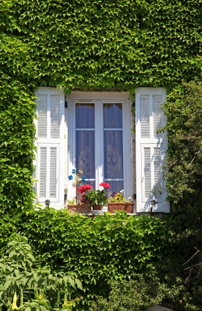 Beautiful provencal house window with white shutters, flower pot and ivy, Provence, France photo