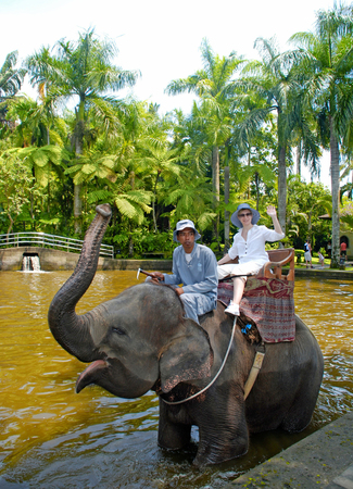 east riding: BALI, INDONESIA - JANUARY 2, 2011: Caucasian woman enjoy a ride with mahout on the back of an Asian elephant during a trek through Elephant Safary Park in Bali, Indonesia.  Editorial