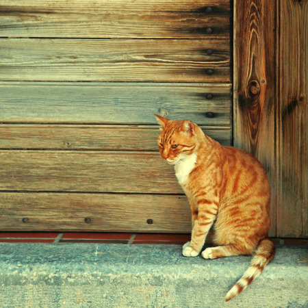 Greek red cat  in wood doorway at the old greek village (Crete, Greece). photo