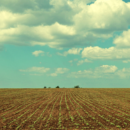 Spring landscape of beautiful agriculture field and blue sky with clouds photo