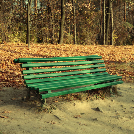 Green empty bench in the autumn park, square toned image photo