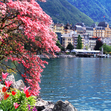 magnolia branch: A beautiful spring landscape with flowers and blooming magnolia branch, Lake Geneva and view of Montreux, Switzerland. Selective focus. Square toned image. Stock Photo