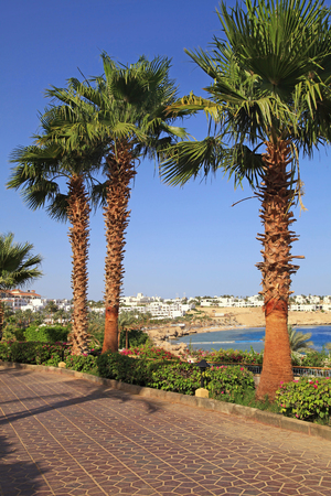 el sheikh: Palm trees and footway in tropical garden on Red sea coast, Sharm el Sheikh, Egypt. Vertical image