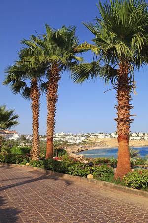sharm el sheikh: Palm trees and footway in tropical garden on Red sea coast, Sharm el Sheikh, Egypt. Vertical image