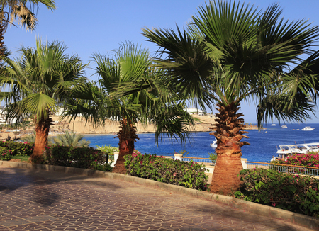 footway: Palm trees and footway in tropical garden on Red sea coast, Sharm el Sheikh, Egypt