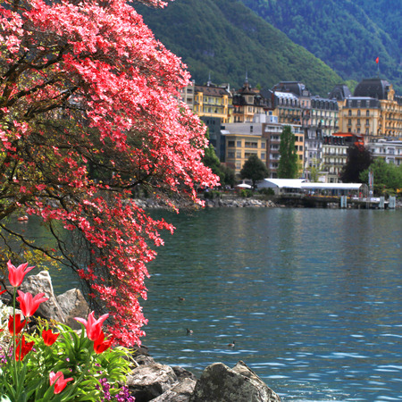 magnolia branch: A beautiful spring landscape with flowers and blooming magnolia branch, Lake Geneva and view of Montreux, Switzerland. Selective focus