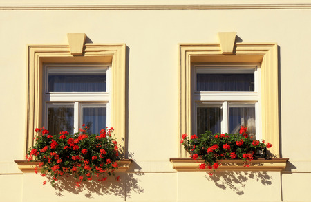 flower boxes: Windows decorated with red flowers in flower boxes, Old town of Prague, Czech Republic