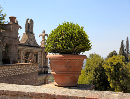 Summer view with terrace and ornate flower pot with boxwood, Italy. Selective focus