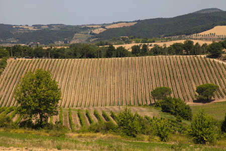 Scenic view of typical Tuscany landscape with vineyard, Italy