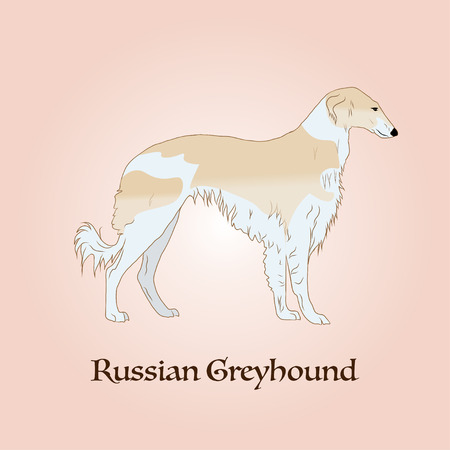 Russian greyhound dog. Symbol of the year 2018.