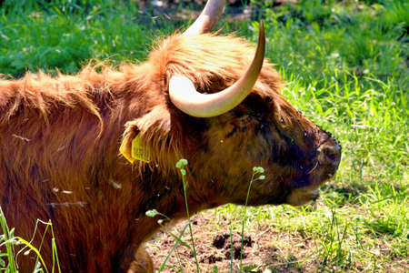 shrieking: Rest the buffalo