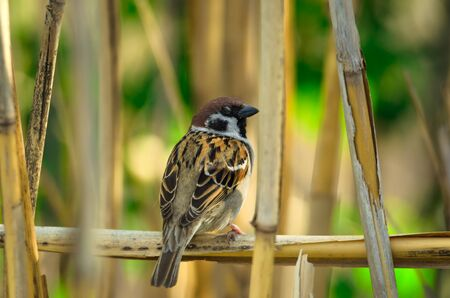 Sharp little sparrow on a branch sits and blinks a beautiful background