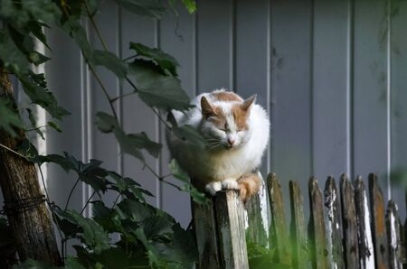 Almost completely white cat sits on the fence portrait Stockfoto