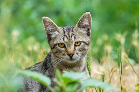 Portrait of a beautiful young gray kitten in the grass