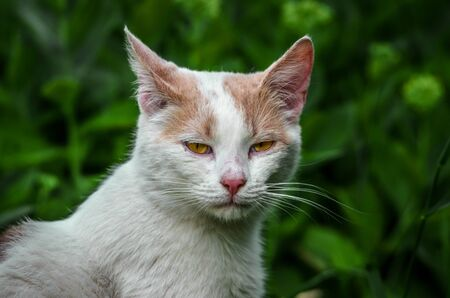 Portrait of a displeased white cat in the grass