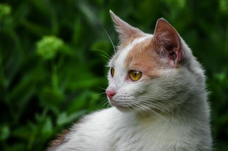 Portrait of a white cat that turned around Banco de Imagens