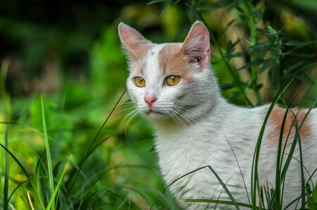 Portrait of a sniffing white cat in the grass