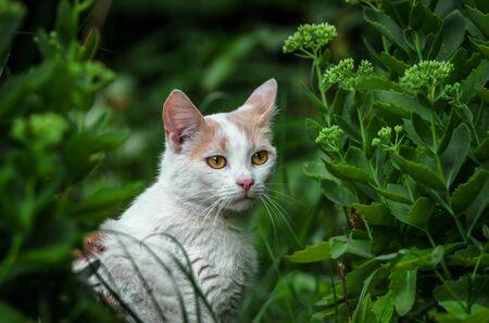 Portrait of a beautiful white cat in the grass Banco de Imagens