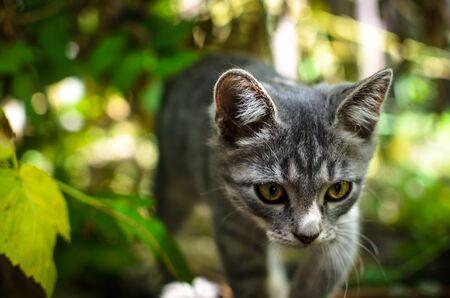 Gray kitten lying in grass