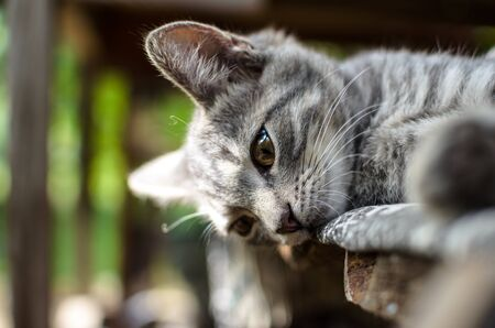 Portrait of a gray kitten looking down with bright eyes