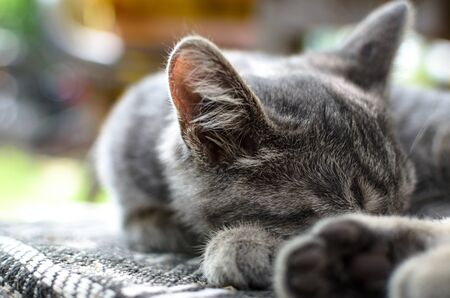 Gray kitten relaxed lies on a plaid on the street