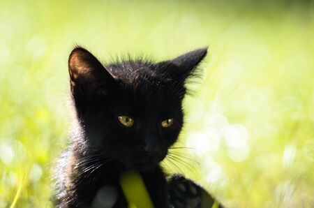 Close-up of a black kitten in the summer grass Stock Photo