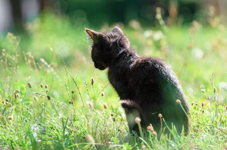 Cute little kitten sits in the grass in summer