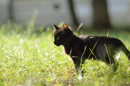 Cute little kitten stands in profile in the grass in summer Stock Photo - 130784219