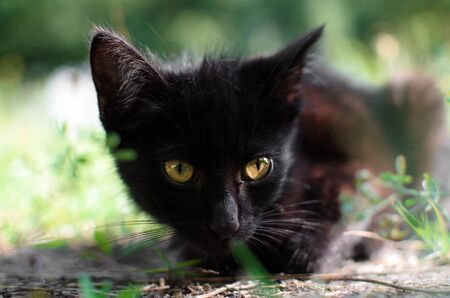 Portrait of a black kitten in the summer Stock Photo