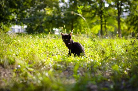 Little black kitten summer photo Stock Photo