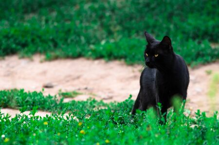 Black cat on a background of greenery