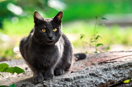 Portrait of a gray cat on a stone