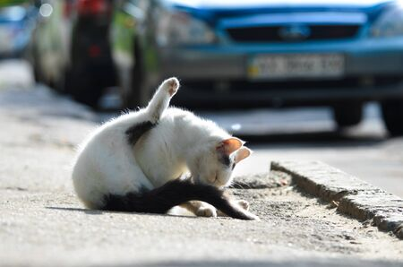 Street white cat in the middle of the road