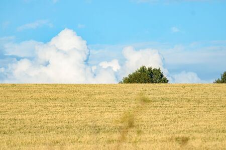 Large clouds on the horizon with a field Stock Photo
