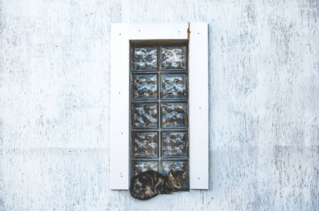 Cat on a stained-glass window stylish photo