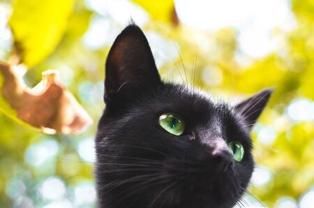 Autumn faded black cat among the leaves Stock Photo