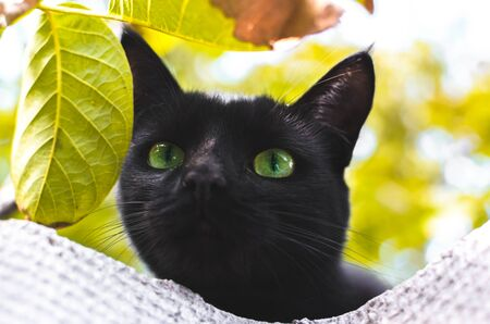 Autumn black cat among the leaves Stock Photo