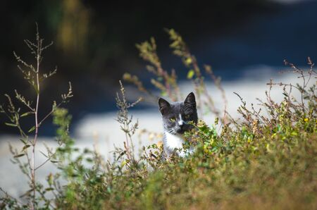 Cat peeks out from the steppe grass