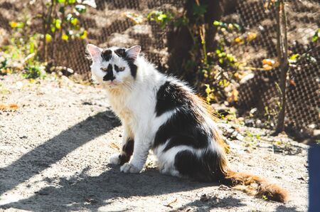 Very old and exhausted village cat