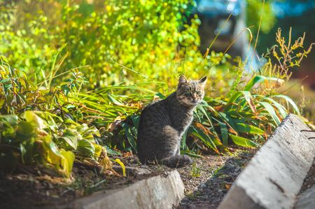 Cat in a bright flowerbed of flowers Stock Photo