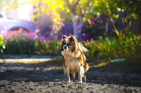 Illustrative photo of a dog on a background of flowers