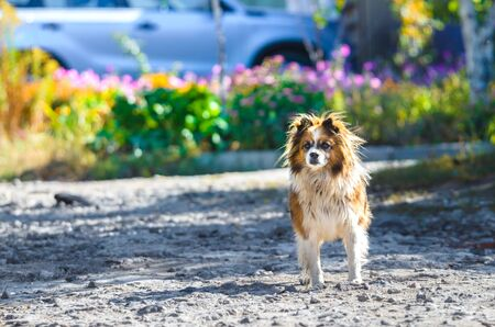 Village fluffy dog on a bright background with flowers
