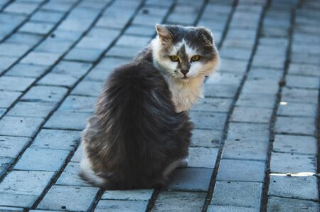 Dark and atmospheric photo of a cat with one ear