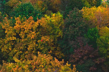 Pattern of autumn trees and foliage