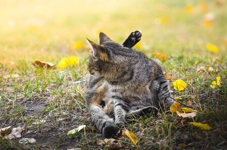 The washing cat on an autumn background in the street