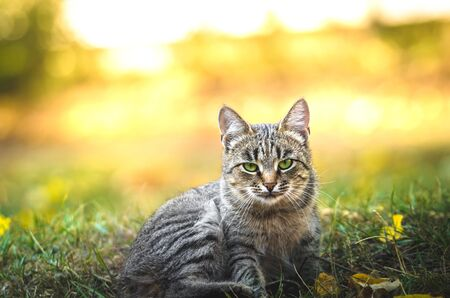 The portrait cat on an autumn background in the street Stock Photo